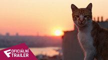 Kedi - Oficiální Trailer | Fandíme filmu