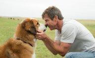 Psí poslání: Film sklízí ostrou kritiku za zacházení s psím hercem   Fandíme filmu