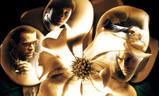 Magnolia | Fandíme filmu