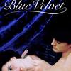 Modrý samet | Fandíme filmu