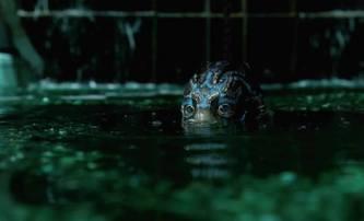 The Shape of Water: První trailer na novou fantasy od del Tora | Fandíme filmu