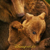 Medvědi | Fandíme filmu