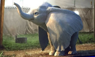Dumbo: Tim Burton přivede k životu animovaného slona | Fandíme filmu