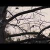 Halloween: Trailer velkého hororového návratu je tu | Fandíme filmu