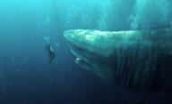 MEG: Monstrum z hlubin: Další mezinárodní trailer dorazil | Fandíme filmu
