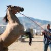 The Mustang: Drsného vězně polidští nezkrotný kůň v prvním traileru | Fandíme filmu