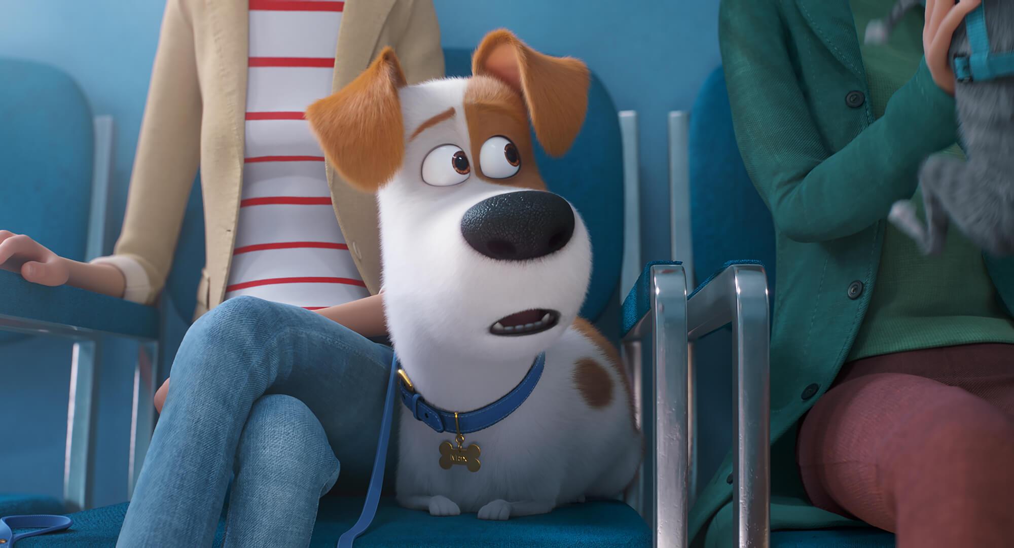Tajný život mazlíčků 2: Domácí zvířata představují v trailerech nová dobrodružství | Fandíme filmu