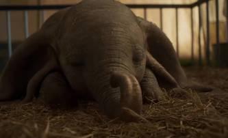 Box Office: Dumbo a další McConaugheyho propadák | Fandíme filmu
