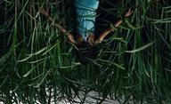 In the Tall Grass: Další horor podle Stephena Kinga se představuje v traileru | Fandíme filmu