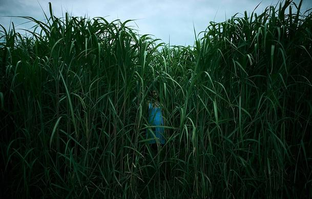 Recenze: Ve vysoké trávě se bát nebudete, naopak vás spíše uspí | Fandíme filmu