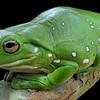 Recenze: Žáby bez jazyka | Fandíme filmu