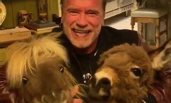 Arnold Schwarzenegger a další hvězdy vysílají k fandům povzbuzující zdravice | Fandíme filmu