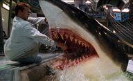 Blood Shark 3D: Už zase se chystá film o obřím žralokovi zabijákovi   Fandíme filmu