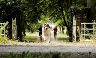 Lassie se vrací: Rodinná klasika má být jednou z prvních novinek, co po karanténě odvážně otevřou česká kina   Fandíme filmu