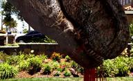 Ebola Rex: Krvežíznivý T-rex s ebolou v krvi mění Los Angeles na Jurský park | Fandíme filmu