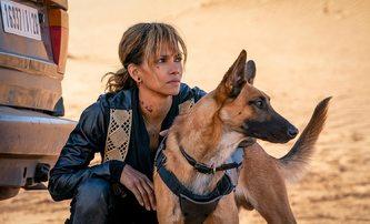 Halle Berry není ořezávátko, většinu akčních scén Johna Wicka 3 točila sama | Fandíme filmu