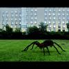 Arachnado: Po žralocích budou tornády létat pavouci | Fandíme filmu