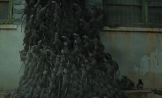 Rat Train: Krysí apokalypsa aneb krvelačné chlupaté bestie v traileru doslova prší z nebe | Fandíme filmu