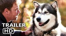 Hero Dog The Journey Home - trailer | Fandíme filmu