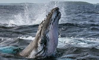 Secrets of the Whales: James Cameron nám přiblíží život velryb   Fandíme filmu