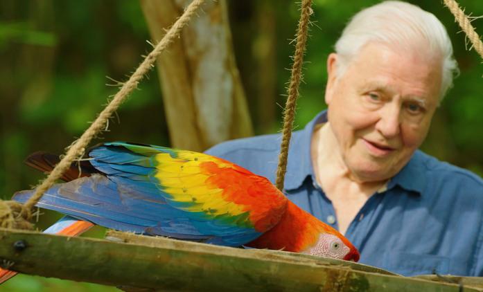 Život v barvě: David Attenborough ukáže divákům, jak barvy fungují ve zvířecí říši   Fandíme seriálům