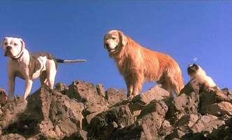 Strays: Opuštěný pes se v komedii pomstí svému pánovi   Fandíme filmu
