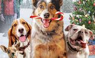 Pups Alone: Blíží se psí variace na Sám doma, pusťte si trailer | Fandíme filmu