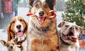 Pups Alone: Blíží se psí variace na Sám doma, pusťte si trailer   Fandíme filmu