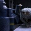 Recenze: Fantastická zvířata a kde je najít | Fandíme filmu