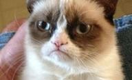 Grumpy Cat: Z internetového virálu bude film | Fandíme filmu