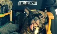 Star Wars VIII: První fotky z placu a pracovní název | Fandíme filmu