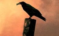 The Raven: Gerarda Butlera chtějí vyhladit roboti | Fandíme filmu