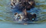 Zombeavers: Zombí bobři útočí   Fandíme filmu